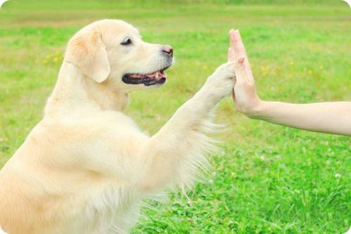 online dog training class
