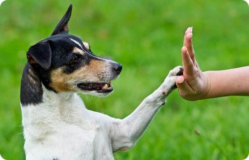dog training strategies